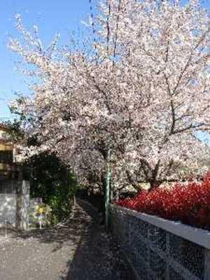駅の桜2010