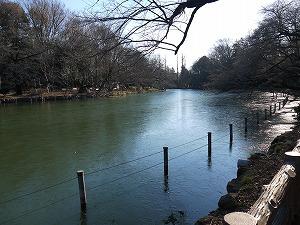 お池の氷り1