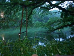 明るい夜のお池のほとり