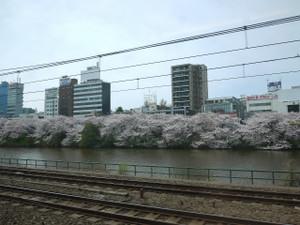 中央線下り桜