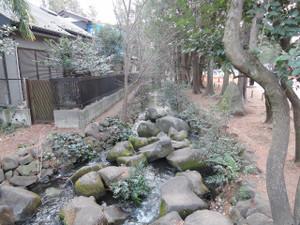 神田川のハシリ