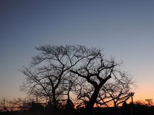 アフリカ、新年の夜明け