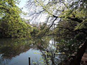 お池のほとり