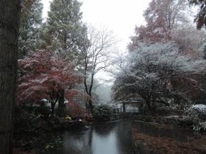 11月の積雪は54年ぶり