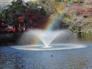 弁天と噴水と虹とオオバンと