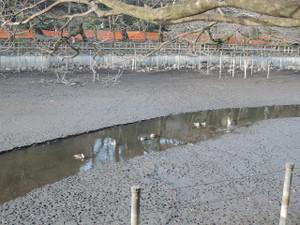 池はかいぼり中。そろそろ水が戻ってくるカモ