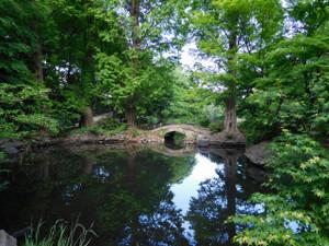 睡蓮のいなくなったひょうたん池