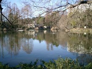 お正月のお池